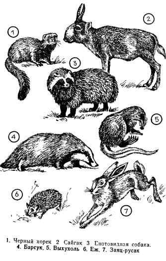 Млекопитающие представлены