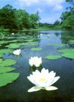 Примером пойменных озер могут служить